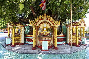 Buddha statues around a huge tree, Su taung pyi pagoda, Myitkyina, Kachin state, Myanmar, Asia