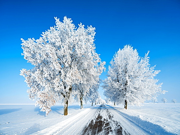 Avenue through deep snowy cold winter landscape, trees with hoarfrost, blue sky, Burgenlandkreis, Saxony-Anhalt, Germany, Europe