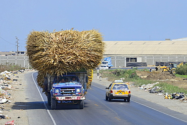 Overloaded truck with sugar cane on littered road, Trujillo, La Liberdad region, Peru, South America