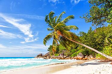 Anse Georgette beach holiday vacation island palm paradise sea water on Praslin, Seychelles, Africa