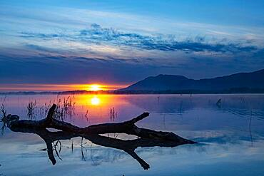 Tree trunk on water surface with reflection at blue hour, Forggensee, Ostallgaeu, Bavaria, Germany, Europe