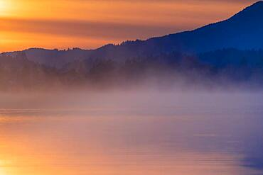 Forest with fog on water surface at blue hour, Forggensee, Ostallgaeu, Bavaria, Germany, Europe