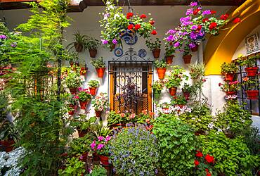 Window in the courtyard decorated with flowers, geraniums in flower pots on the house wall, Fiesta de los Patios, Cordoba, Andalusia, Spain, Europe