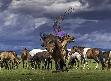 Nomad trying to catch his horse (Equus) in Arkhangai province, Mongolia, Asia