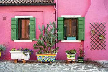 Pink house with flower pots, colorful facade, Burano Island, Venice, Veneto, Italy, Europe