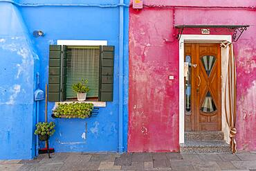 Door and window of a blue and pink house, colorful houses, colorful facade, Burano Island, Venice, Veneto, Italy, Europe