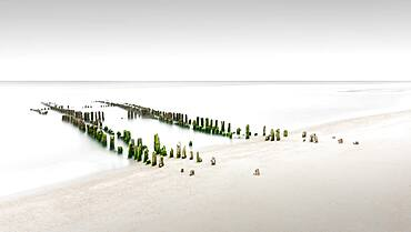 Old groynes overgrown with algae, Rantum, Sylt