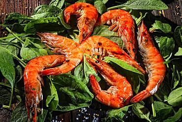 King prawns, tiger prawns on fresh spinach