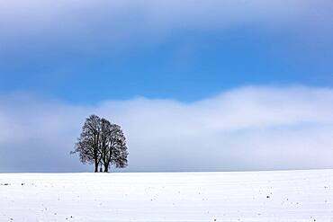 Pair of trees with a cross in the snow, Schemmerhofen, Baden-Wuerttemberg, Germany, Europe
