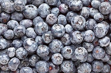 Bunch of blueberries background macro image