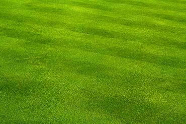 Fresh cut green grass on a spring day
