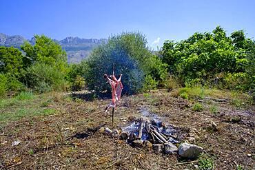 Whole lamb asado, barbecuing on iron cross spit next to open fire in Altea La Vella, Alicante, Spain, Europe
