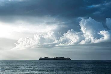 Island, Jackson Bay, Coromandel, North Island, New Zealand, Oceania
