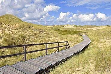 Boardwalks in the dune area, Norddorf, Amrum, North Frisian Island, North Frisia, Schleswig-Holstein, Germany, Europe
