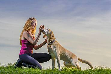 Young woman playing with dog, Labrador Retriever, sunset, Schorndorf, Baden-Wuerttemberg, Germany, Europe