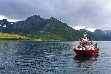 Little ferry bringing tourists to Svartisen glacier, Kystriksveien Coastal Road, Norway, Europe