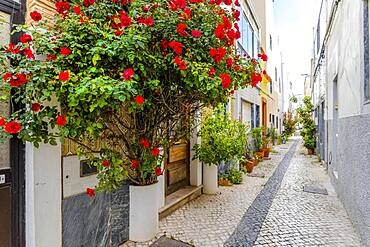 Red flowers and other plants decorating the narrow street of Olhao, Algarve, Portugal, Europe