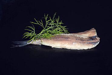 Freshly fermented fillet of Atlantic herring (Clupea harengus), Scheveningen, Netherlands