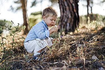 Cute toddler exploring forest and blowing dandelion