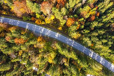 Aerial view, country road in autumn from above, Reit im Winkl, Bavaria, Germany, Europe
