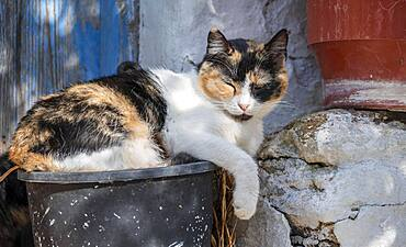 Cat sleeping in a bucket, Paros, Cyclades, Aegean Sea, Greece, Europe