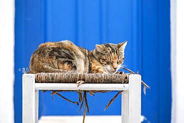 Cat lying on chair, Parika, Paros, Cyclades, Aegean Sea, Greece, Europe
