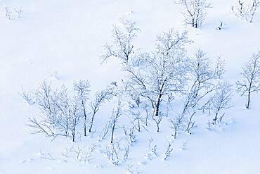 Winter landscape, Storelvvassdraget, Lebesby, Norway, Europe