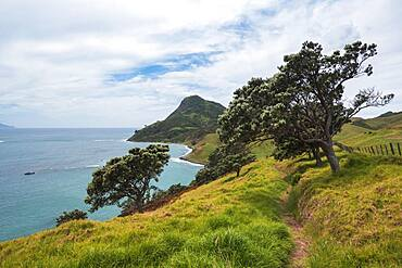 Beach view, Fletcher Bay, Coromandel, North Island, New Zealand, Oceania