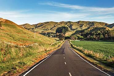 Hilly landscape, Mahia Bay, North Island, New Zealand, Oceania