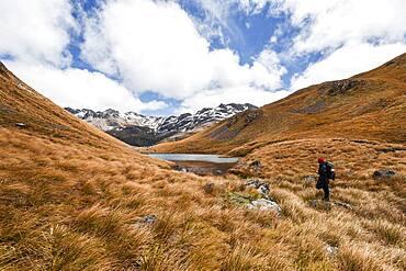 Hiker at Arthur's Pass, Selwyn, Canterbury, South Island, New Zealand, Oceania