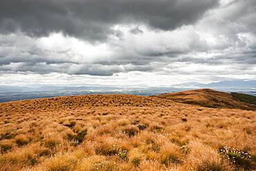 Landscape, Lake Te Anau, South West New Zealand World Heritage Area, Te Wahipounamu, Fiordland National Park, South Island, New Zealand, Oceania