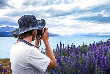 Guy with camera at a field of lupins (disambiguation), Lake Tekapo, Canterbury region, Mackenzie District, South Island, New Zealand, Oceania