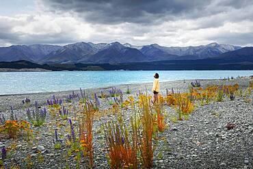 Guy at a beach at Lake Tekapo, Canterbury region, Mackenzie District, South Island, New Zealand, Oceania