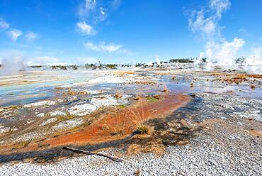 Red mineral deposits at a thermal spring, Noris Geyser Basin, Yellowstone National Park, Wyoming, USA, North America