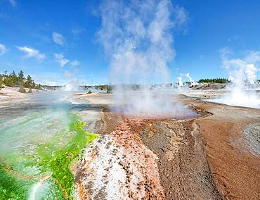 Red mineral deposits and green algae at a thermal spring, steaming hot springs, Whirligig Geyser, Noris Geyser Basin, Yellowstone National Park, Wyoming, USA, North America