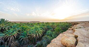 Cliff edge and valley full of palm trees, sunset, oasis Source Bleu, Blue Spring, Madkhal Meski, Morocco, Africa