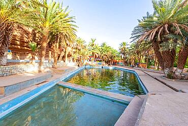 Swimming pool with palm trees, Oasis Source Bleu, Blue Spring, Madkhal Meski, Morocco, Africa
