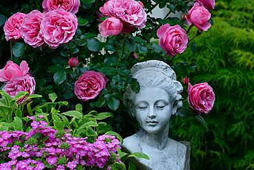 Female bust with roses, variety 'Leonardo da Vinci', Germany, Europe