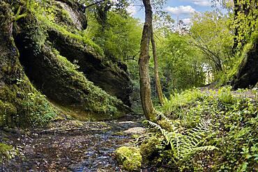 Primeval landscape in the Leidinghofer valley, Mathelbach, karst, rocks, overhang, near Leidingshof, part of Markt Heiligenstadt, Franconian Switzerland, Upper Franconia, Franconia, Bavaria, Germany, Europe
