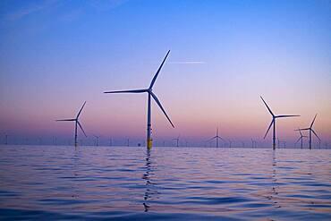 Norther Offshore Wind Farm near Knokke, at sunrise, Belgium, Europe