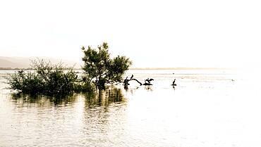 Sunset over Lake Kerkini, Cormorants sitting on trees, Macedonia, Greece, Europe