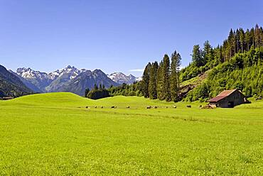 View from the meadows near the village Reichenbach to the mountain panorama of the Allgaeu Alps, in front the Himmelschrofen 1776 m, Allgaeu, Bavaria, Germany, Europe