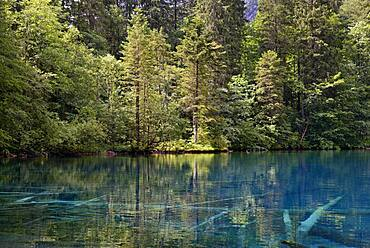 Mountain lake, Christlessee with clear turquoise water, tree trunks at the bottom of the lake, Trettachtal, Allgaeu Alps, Allgaeu, Bavaria, Germany, Europe