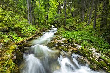 Torrent in Hartelsgraben, Gesaeuse National Park, Styria, Austria, Europe
