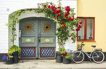 Roses at a colorful gate in a small street in the idyllic downtown of Ystad, Scania, Sweden, Scandinavia, Europe