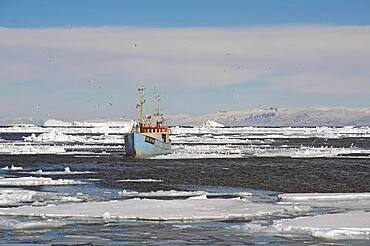 Blue fishing boat in drift ice, snow covered mountains in background, winter, Disko Bay, Ilulissat, Greenland, Denmark, North America