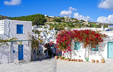White and blue Cycladic houses with flowers, old town of Lefkes, Paros, Cyclades, Greece, Europe