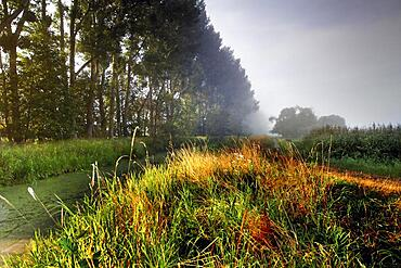 Grassland in the Droemling, drainage ditch, lowland moor, lowland area, biosphere reserve, nature reserve, Kolonnenweg, Lochplattenweg, inner-German border installation, Gruenes Band, border path, near Oebisfelde, Boerde County, Saxony-Anhalt, De
