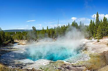 Emerald Spring, Noris Geyser Basin, Yellowstone National Park, Wyoming, USA, North America