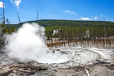 Steaming hot spring, dead trees in the back, Noris Geyser Basin, Yellowstone National Park, Wyoming, USA, North America